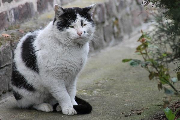 Онкология у кошек