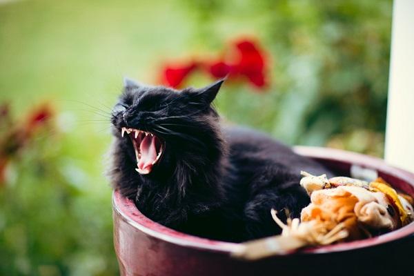 Почему у кошки пахнет изо рта
