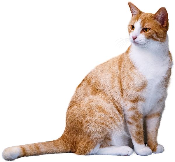 Как дать кошке активированный уголь