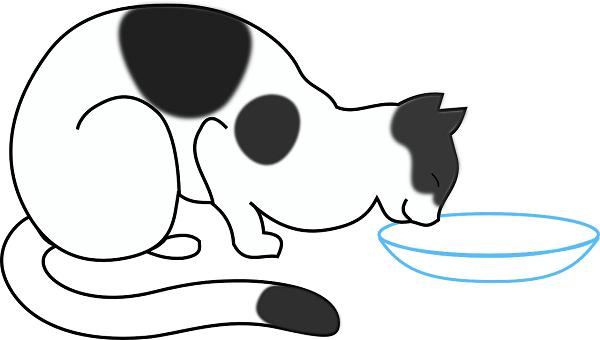 Обезвоживание у кота