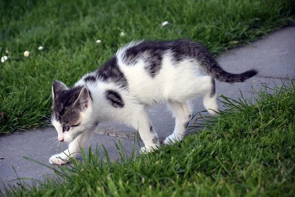 Артроз у кошек