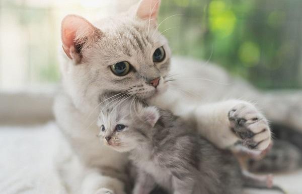 когда начинают шевелиться котята у беременной кошки
