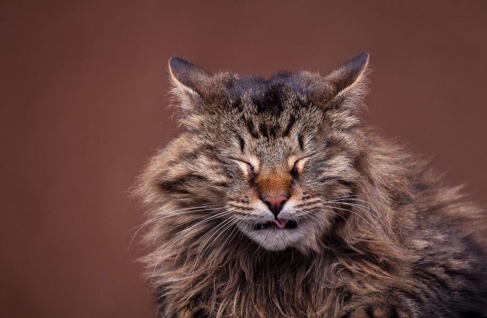 кот чихает и сопли что делать