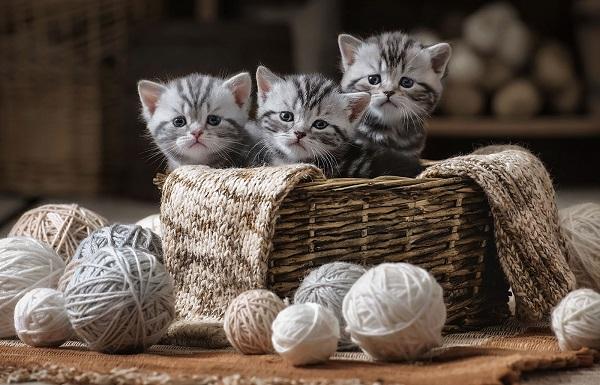 как понять что кошка родила всех котят